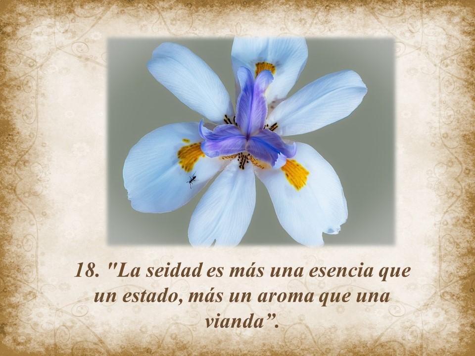 Jesus Maxima 18